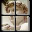 TilePhotos icon