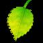 Shade icon