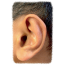 Dolce Ear Training 1.9.7