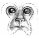 Noble Ape Simulation