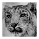 Snow Leopard Compatibility Checker